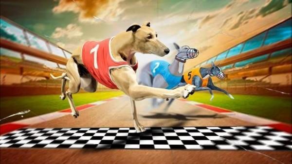 疯狂狗竞赛模拟器