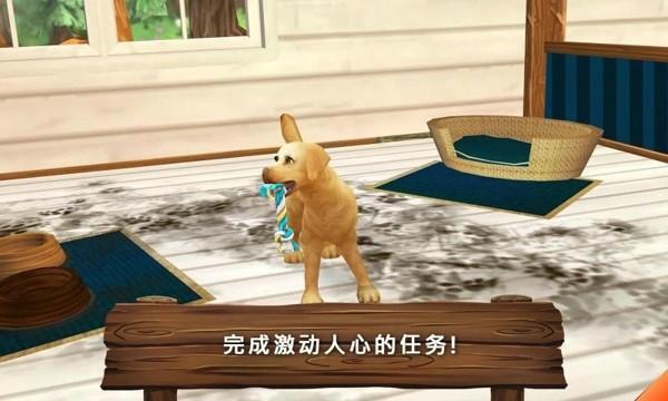 熊小米动物救助站